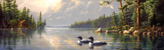 Summertime Loons