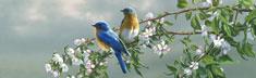 Spring Blossom Bluebirds