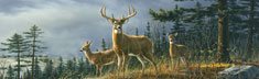 Autumn Whitetails