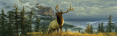 High Mountain Elk