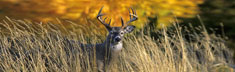 Autumn Buck