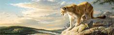 Vantage Point Cougar