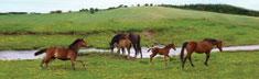 Wild Gallop