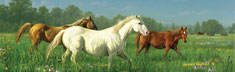 Prarie Meadow Horses