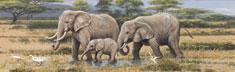 African Safari I