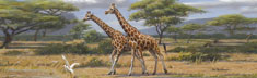 African Safari II