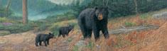 Bearly Climbing