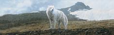 Tundra Song