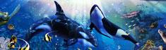 Harmonious Orcas ll