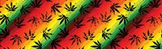Cannabis Canvas